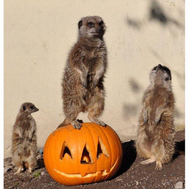 Зверский Halloween