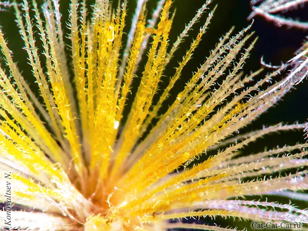 Макросъемка цветов. Колючки кактуса