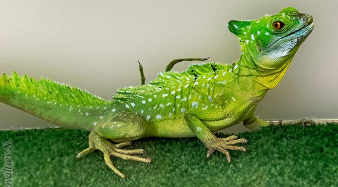 Рептилии Юннатки