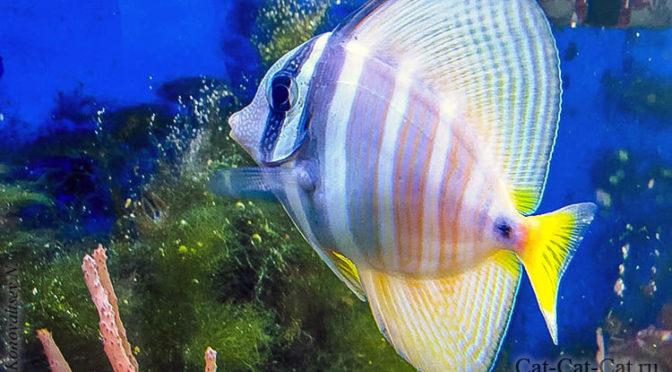 Аквариумные рыбки Юннатки