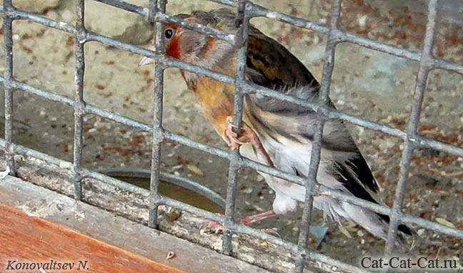 Птицы Юннатки