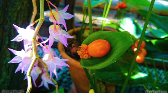Экзотические и необычные растения оранжереи Санкт-Петербурга