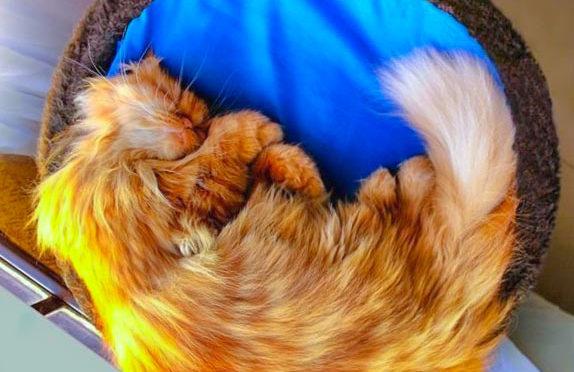 Firefox: некоторые дополнения были отключены. Включаем!